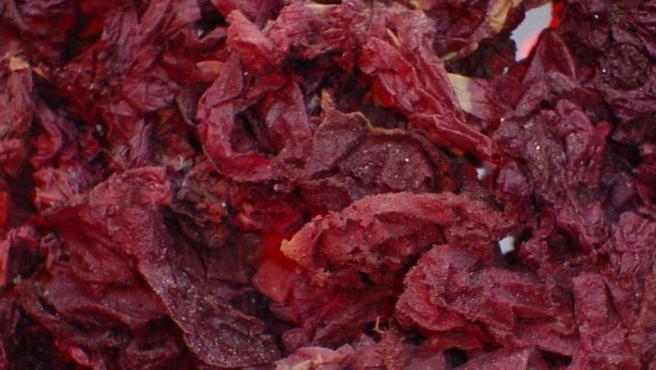 El alga 'Gigartina Chamissoi'. (AGENCIAS)