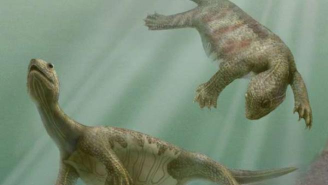 """Reconstrucción de """"Odontochelys semitestacea"""", tortuga ancestral del triásico en China (EFE)."""