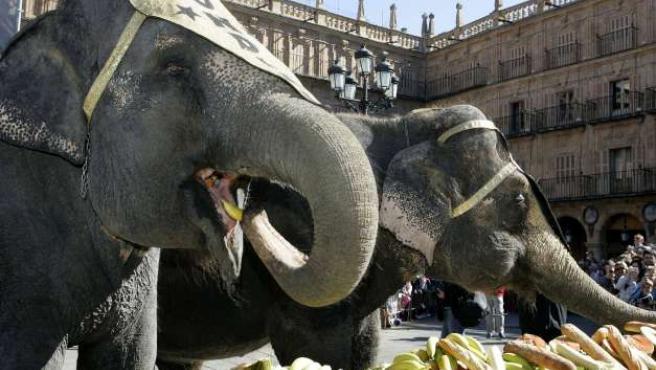 Dos elefantes se dan una gran merendola.