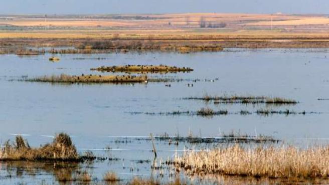 La laguna de La Nava alberga unas 11.000 aves. (ICAL)