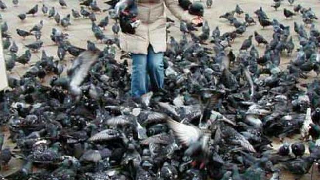Las palomas suponen molestias a los ciudadanos.
