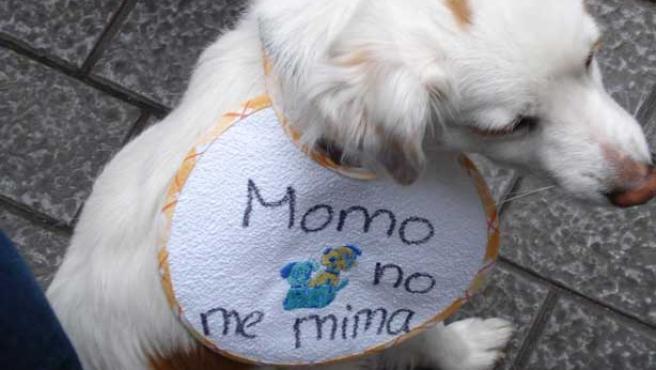 Un centenar de perros y sus dueños se concentraron en Las Palmas de Gran Canaria
