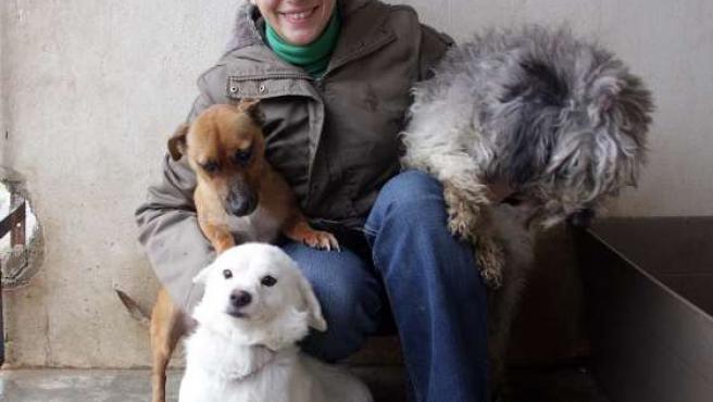 Perros abandonados en Granada, que serán adoptados en Europa.