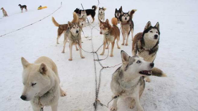 Los perros de Jaime Pou.