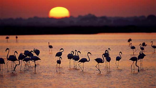 Imagen del Parque natural de Doñana.