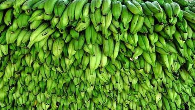 Plátanos de la Asociación de Organizaciones de Productores de Plátanos de Canarias (Asprocan).