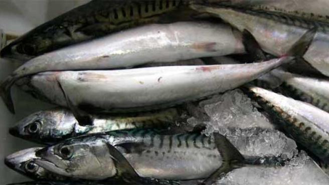 Varios ejemplares de caballa en una lonja de pescados. (ARCHIVO)
