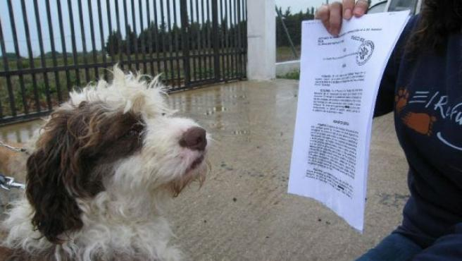 Un perro mira el auto judicial frente a la perrera de Puerto Real. EL REFUGIO.