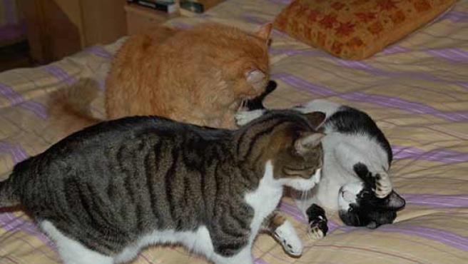 La alergía a los gatos es de las más frecuentes.