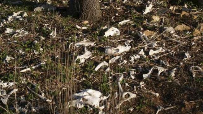 Un centenar de galgos muertos en el antiguo vertedero de Villatobas.