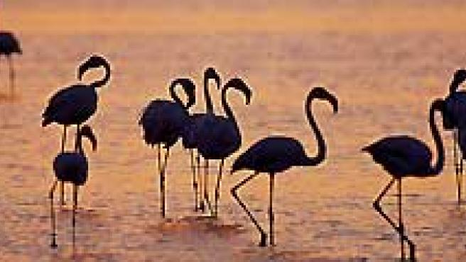 El Parque natural de Doñana cumple 40 años este 2009. (WWF).