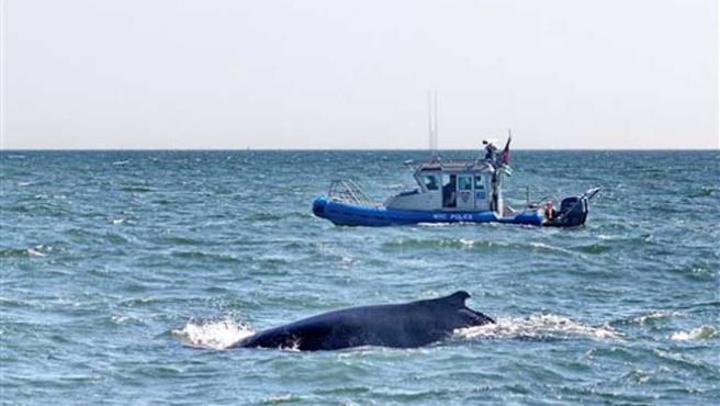 Imagen de la ballena de Nueva York