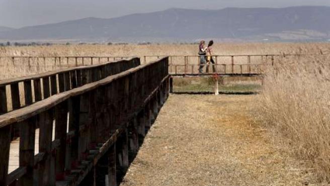 Unos visitantes pasean por las pasarelas del Parque Nacional de las Tablas de Daimiel.