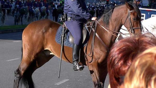 Un policía a caballo, con gorra en vez de casco.