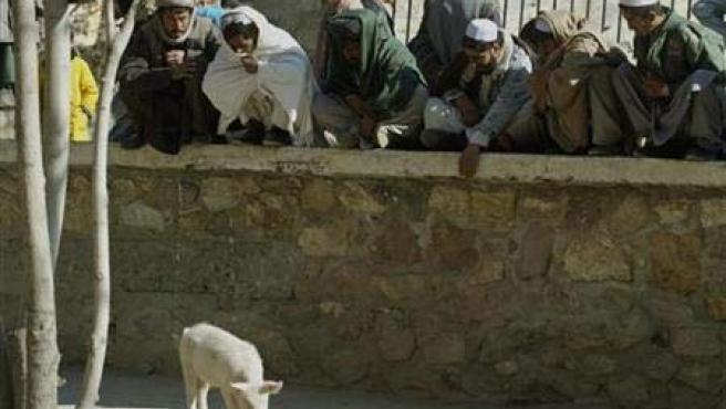 El cerdo del zoo de Kabul, en una imagen del año 2002.