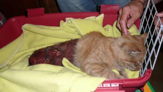El gato fue encontrado con vida pero con medio cuerpo despellejado. Esta imagen puede herir su sensibilidad.