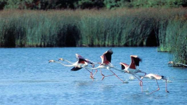Las marismas de Doñana, en una imagen de archivo.
