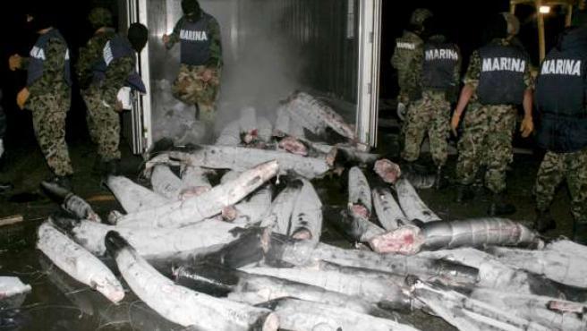 Encontraron los sobres de cocaína en el interior de más de 20 tiburones.
