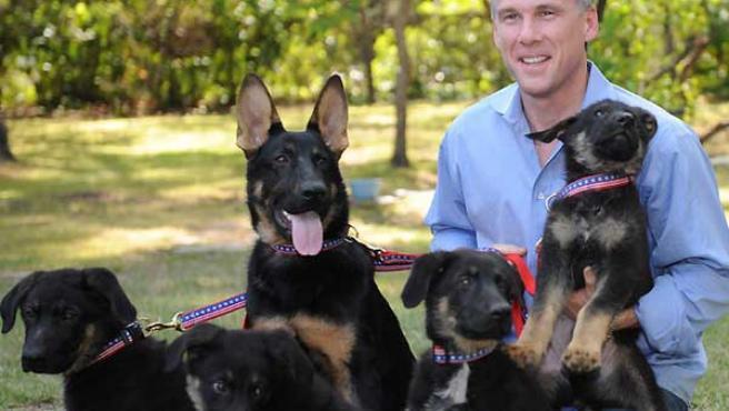 Una foto de los perros clonados a partir de Trakr