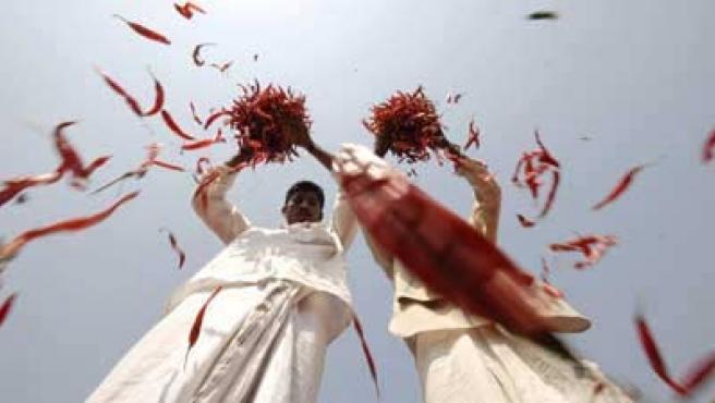 Las fuerzas de seguridad indias usarán el chile más picante del mundo como arma.