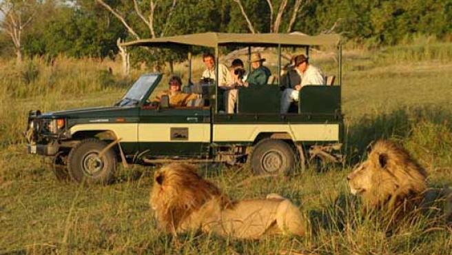 Turistas fotografían a leones de una reserva.