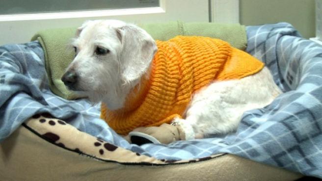 Chanel, la perra más anciana del mundo.