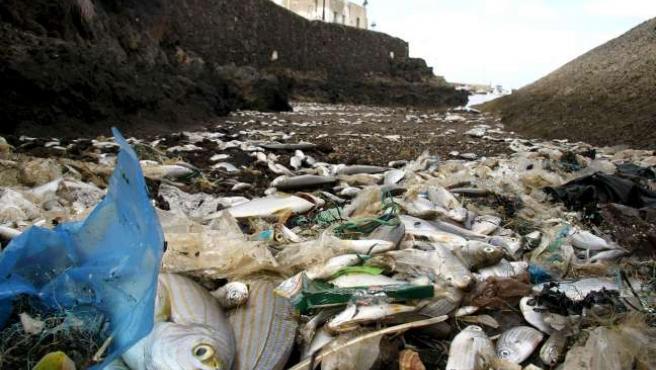 Entre tres y cuatro toneladas de peces muertos o moribundos han varado en el puerto de Órzola (Lanzarote).