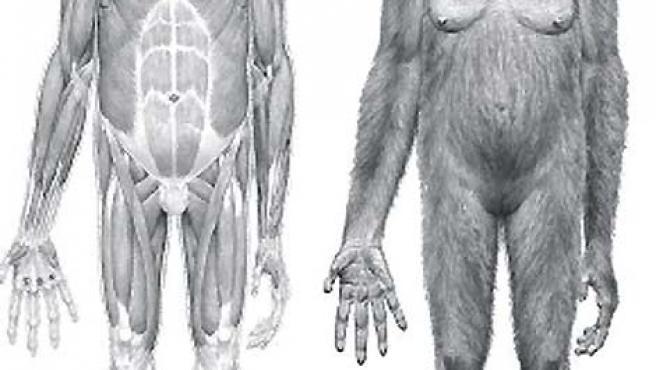 Los científicos han reconstruido la imagen de 'Ardi' a partir de los restos fósiles encontrados.