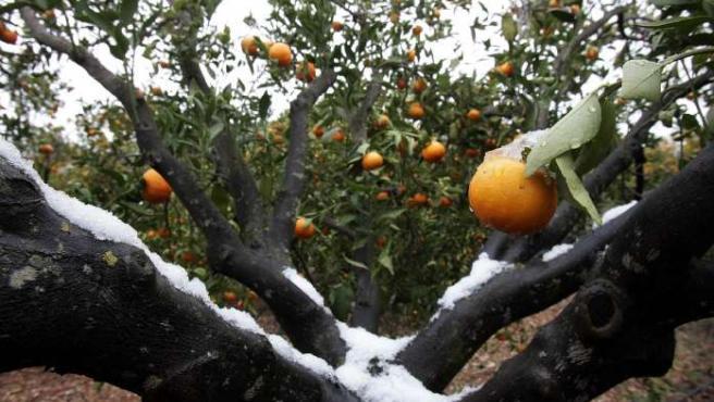 Imagen de archivo de un campo de naranjas en Valencia.