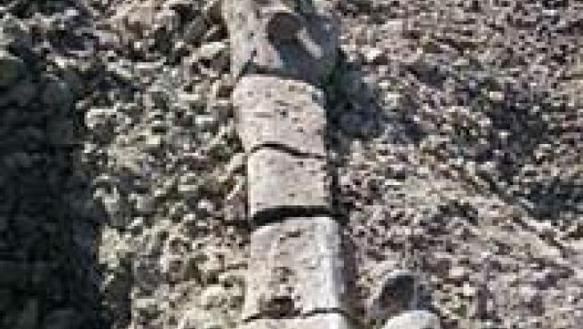 Fósil de dinosaurio encontrado en la Patagonia argentina.