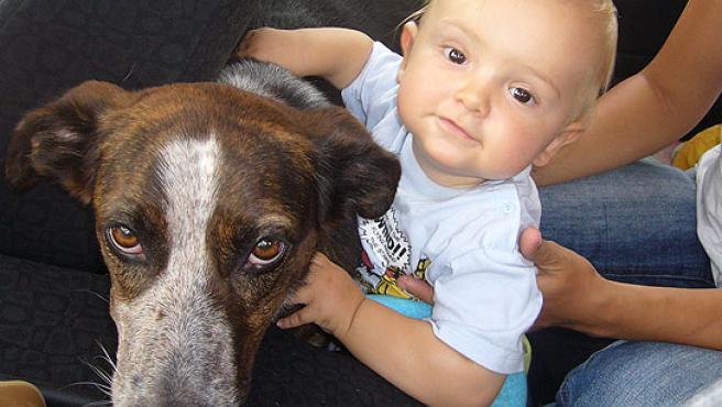 Los mejores perros para los niños pequeños son de tamaño mediano o grande