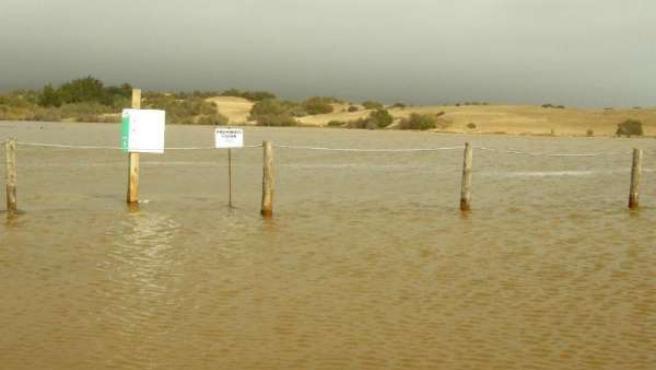 Imagen de La Charca y las dunas de Maspalomas