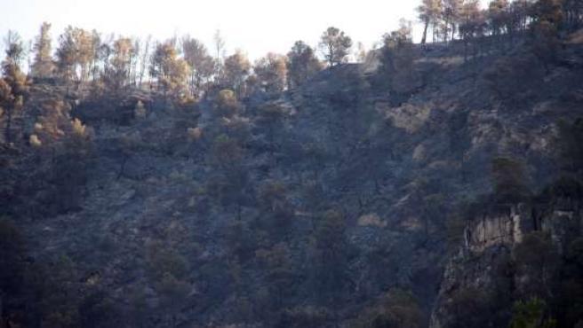 Zona quemada por el incendio en Benifallet.