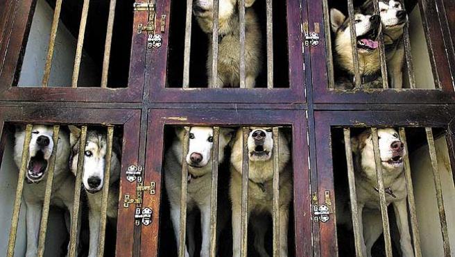 Perros enjaulados, en una imagen de archivo.