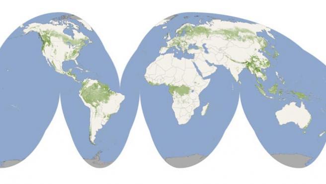 Una imagen del mapa de la masa forestal mundial.