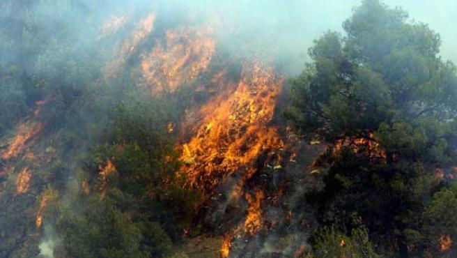 Los incendios han acabado con el 2% de la masa forestal en España.