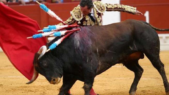 La Comisión Investigadora del Maltrato Animal intentará que las corridas de toros se prohiban en Andalucía.