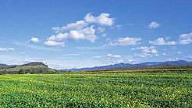 El Gobierno de Navarra subvenciona con 5,1 millones la modernización de explotac