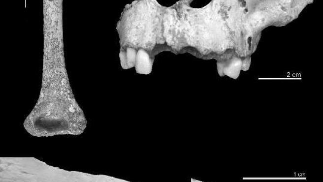 Restos con signos de canibalismo encontrados en Atapuerca