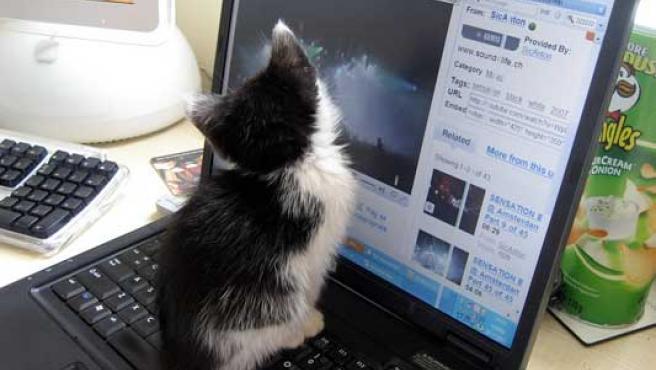 Un gatito sobre una portátil que muestra un vídeo de YouTube.