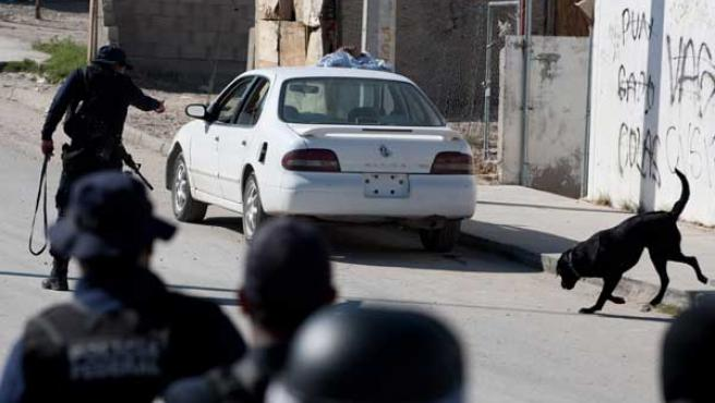 Policías federales usan perros entrenados para detectar explosivos mientras inspeccionan un vehículo abandonado con una cabeza humana en una calle de Ciudad Juárez.