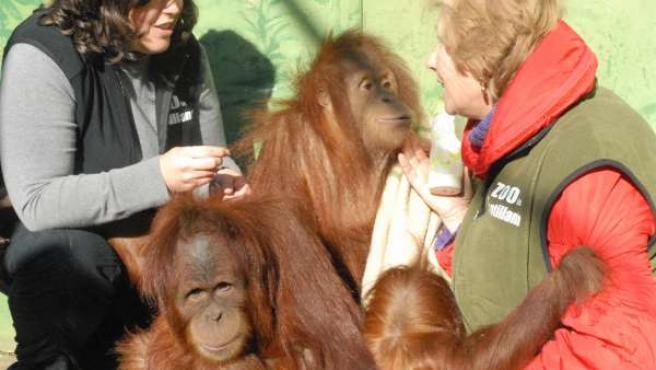 Despedida de Silvestre en el Zoo de Santillana