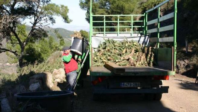 Imagen de los trabajos de eliminación de especies invasoras