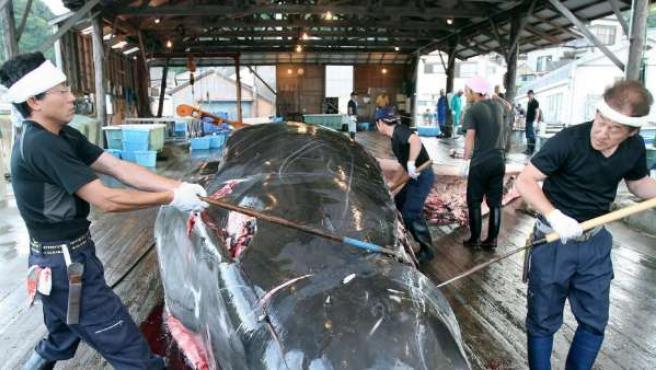 Pescaderos japoneses descuartizan una ballena de 10 metros en el puerto de Wada, Japón.