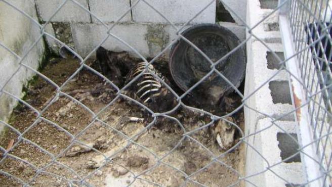Uno de los perros fallecidos