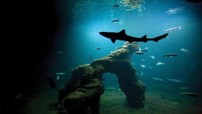 Tiburones en el Museo Marítimo