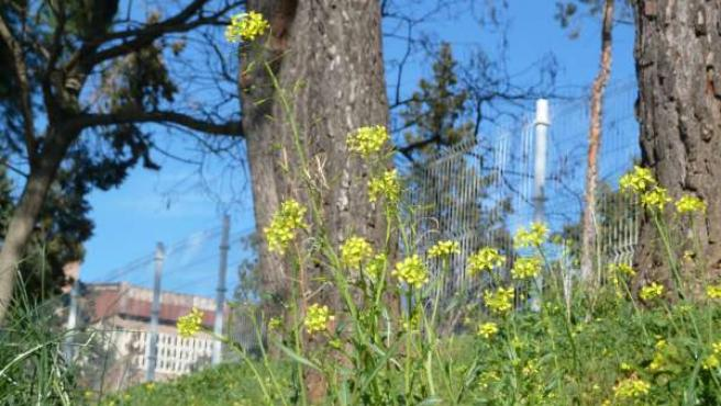 Las flores en primavera causan alergia