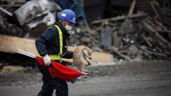 Un trabajador con un gato mientras se aleja de los escombros de los edificios destruidos en Kesennuma (Japón), dos semanas después de que el área fuera devastada por un terremoto de magnitud 9,0 y el tsunami.