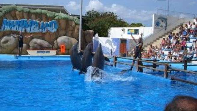 Espectáculo De Delfines En Marineland