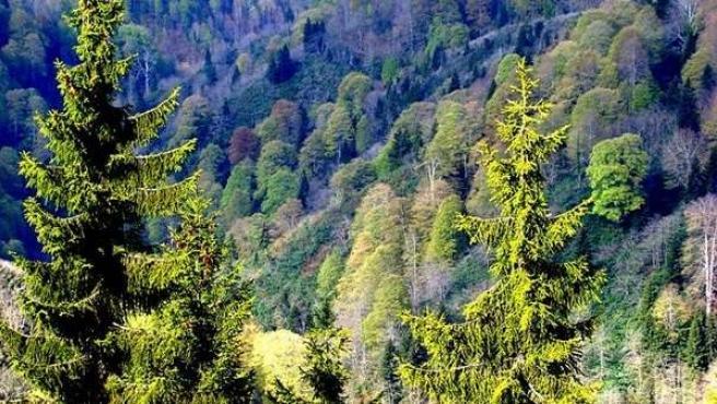 Un bosque.
